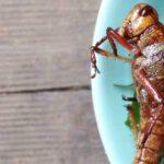 assiette d'insectes sur table en bois